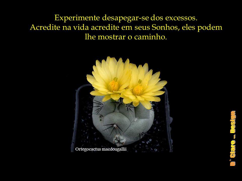Experimente desapegar-se dos excessos.