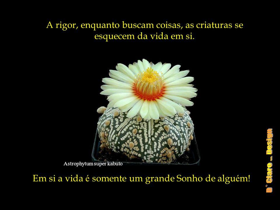 Em si a vida é somente um grande Sonho de alguém!