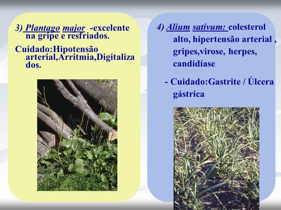 4) Alium sativum: colesterol alto, hipertensão arterial , gripes,virose, herpes, candidíase