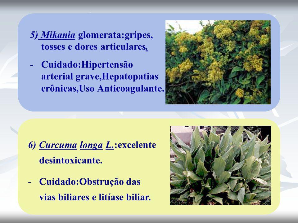 5) Mikania glomerata:gripes, tosses e dores articulares.
