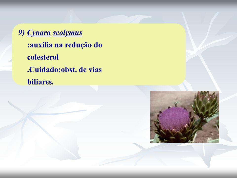 9) Cynara scolymus :auxilia na redução do colesterol. Cuidado:obst