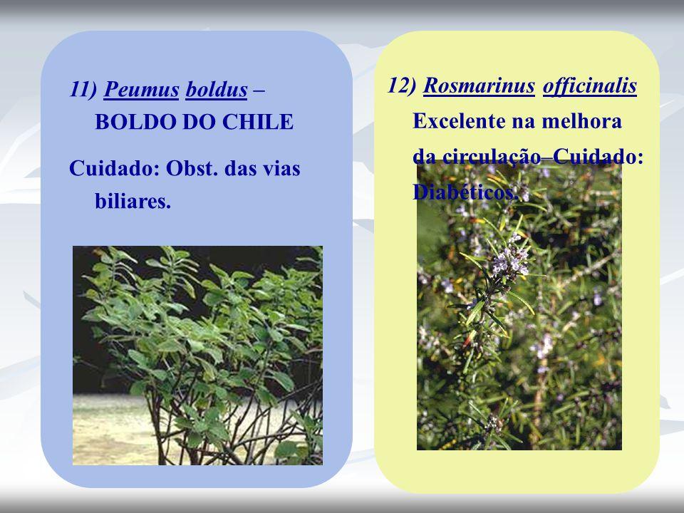 12) Rosmarinus officinalis Excelente na melhora da circulação–Cuidado: Diabéticos.