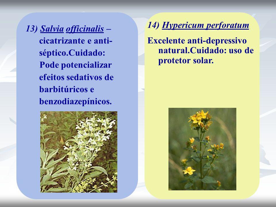 14) Hypericum perforatum