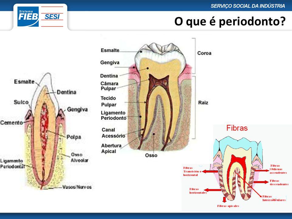 O que é periodonto