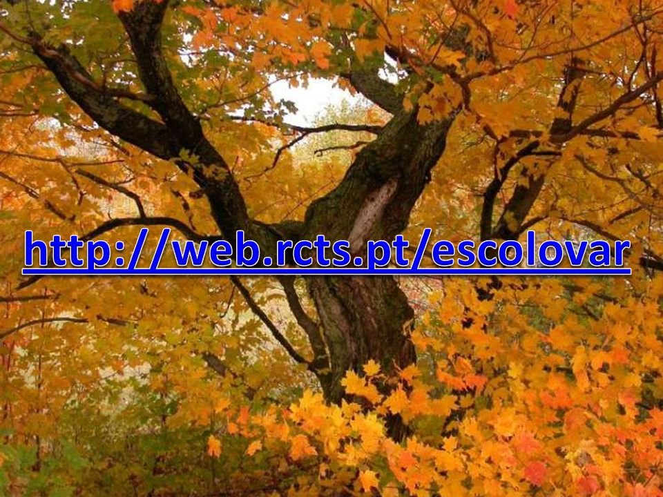 http://web.rcts.pt/escolovar