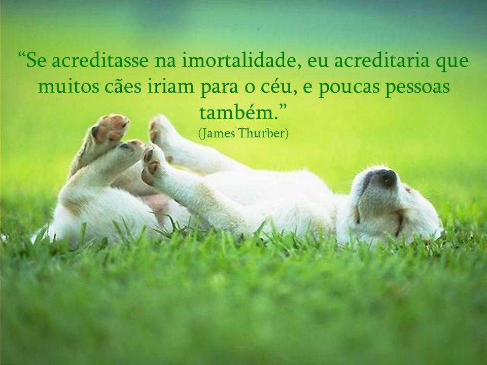 Se acreditasse na imortalidade, eu acreditaria que muitos cães iriam para o céu, e poucas pessoas também.