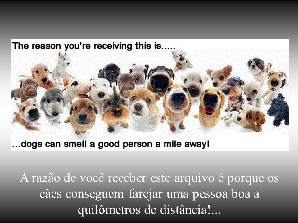A razão de você receber este arquivo é porque os cães conseguem farejar uma pessoa boa a quilômetros de distância!...
