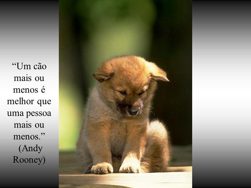 Um cão mais ou menos é melhor que uma pessoa mais ou menos.