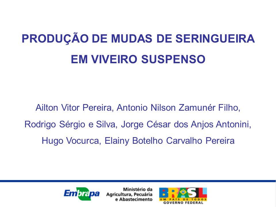 PRODUÇÃO DE MUDAS DE SERINGUEIRA