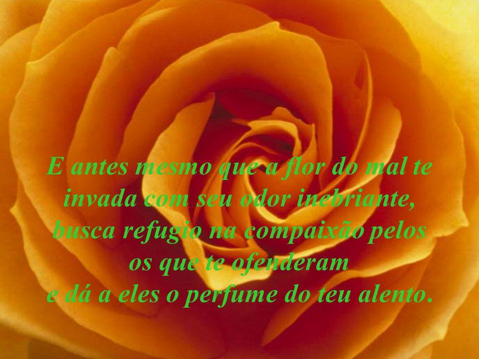 E antes mesmo que a flor do mal te invada com seu odor inebriante, busca refugio na compaixão pelos os que te ofenderam e dá a eles o perfume do teu alento.