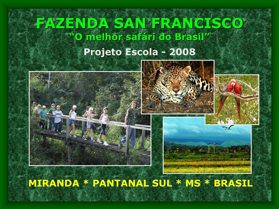 FAZENDA SAN FRANCISCO O melhor safári do Brasil