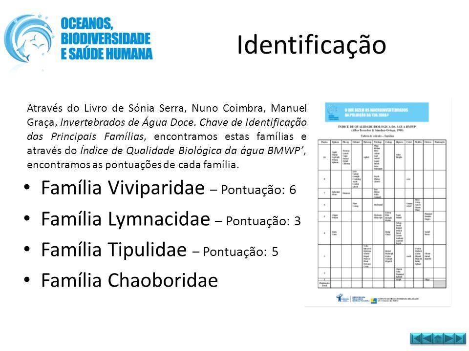 Identificação Família Viviparidae – Pontuação: 6