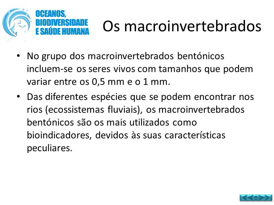 Os macroinvertebrados