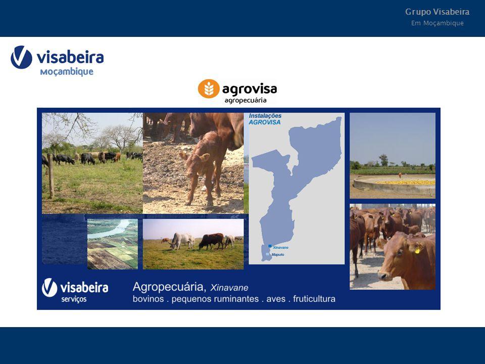 Grupo Visabeira Em Moçambique