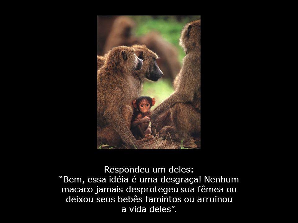 Respondeu um deles: Bem, essa idéia é uma desgraça! Nenhum macaco jamais desprotegeu sua fêmea ou deixou seus bebês famintos ou arruinou.