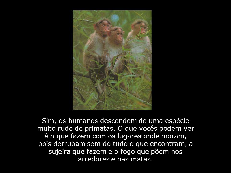 Sim, os humanos descendem de uma espécie muito rude de primatas