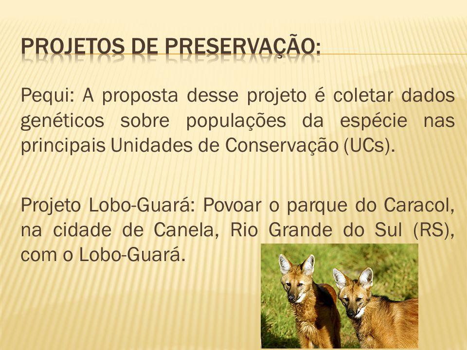 Projetos de preservação: