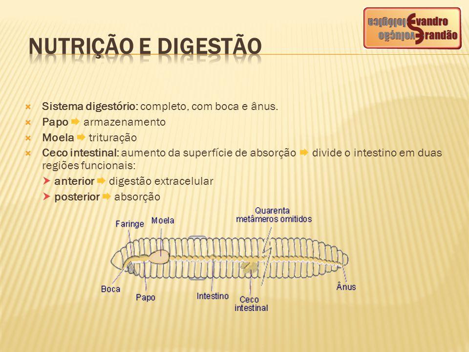 NUTRIÇÃO E DIGESTÃO Sistema digestório: completo, com boca e ânus.