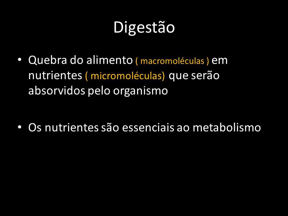 Digestão Quebra do alimento ( macromoléculas ) em nutrientes ( micromoléculas) que serão absorvidos pelo organismo.