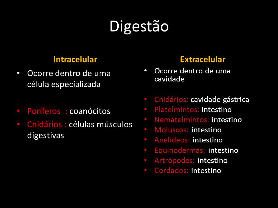Digestão Intracelular Extracelular