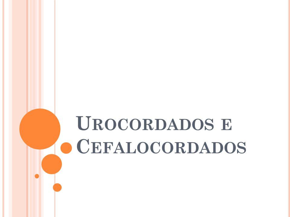 Urocordados e Cefalocordados