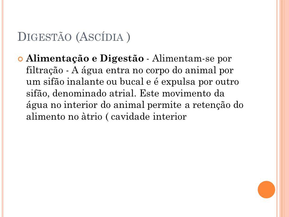 Digestão (Ascídia )