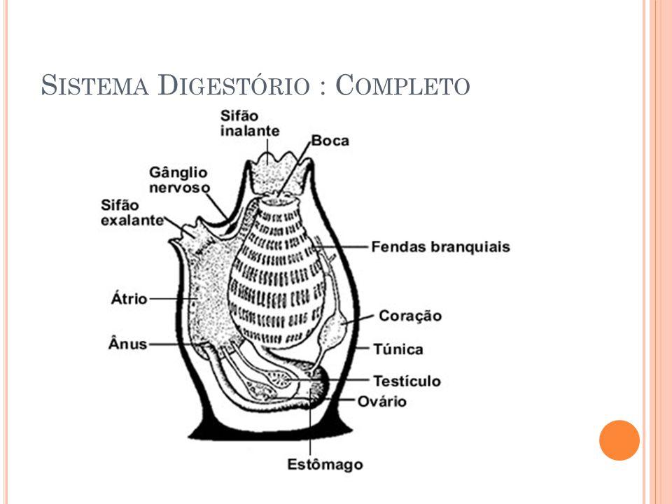 Sistema Digestório : Completo