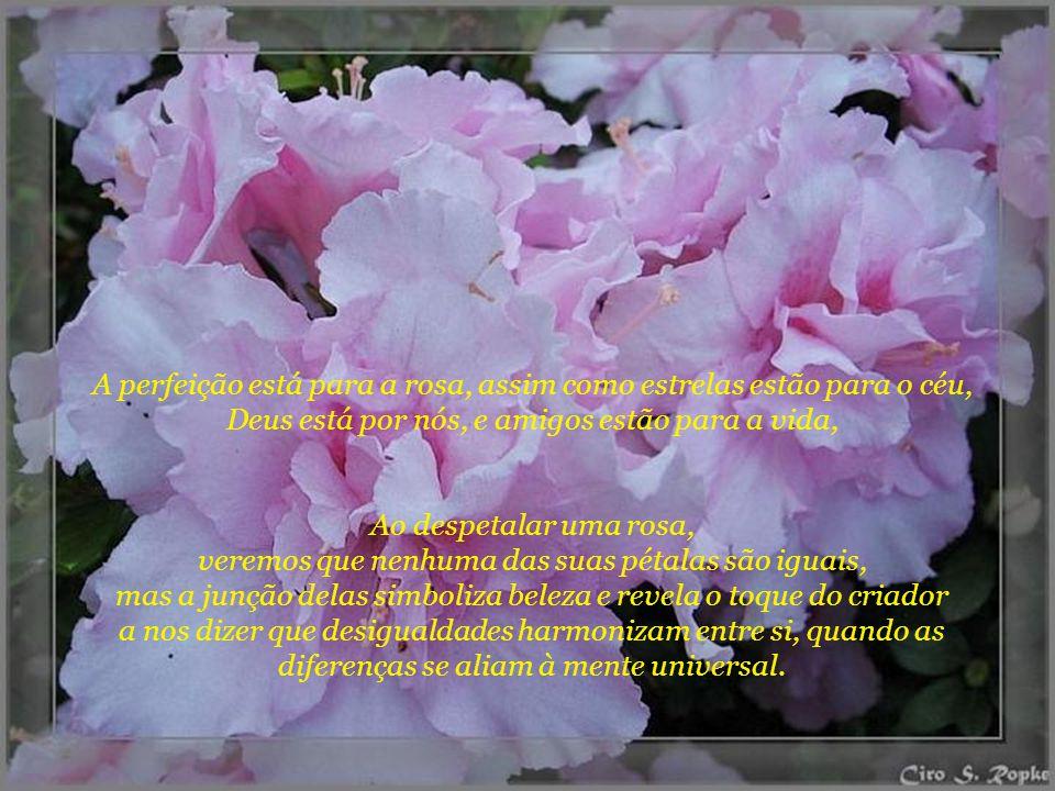 A perfeição está para a rosa, assim como estrelas estão para o céu, Deus está por nós, e amigos estão para a vida,