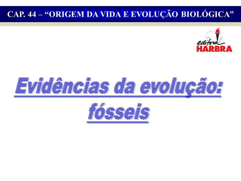 Evidências da evolução: fósseis
