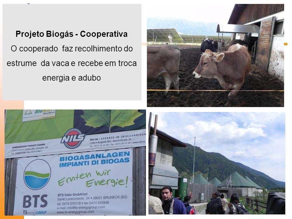 Projeto Biogás - Cooperativa