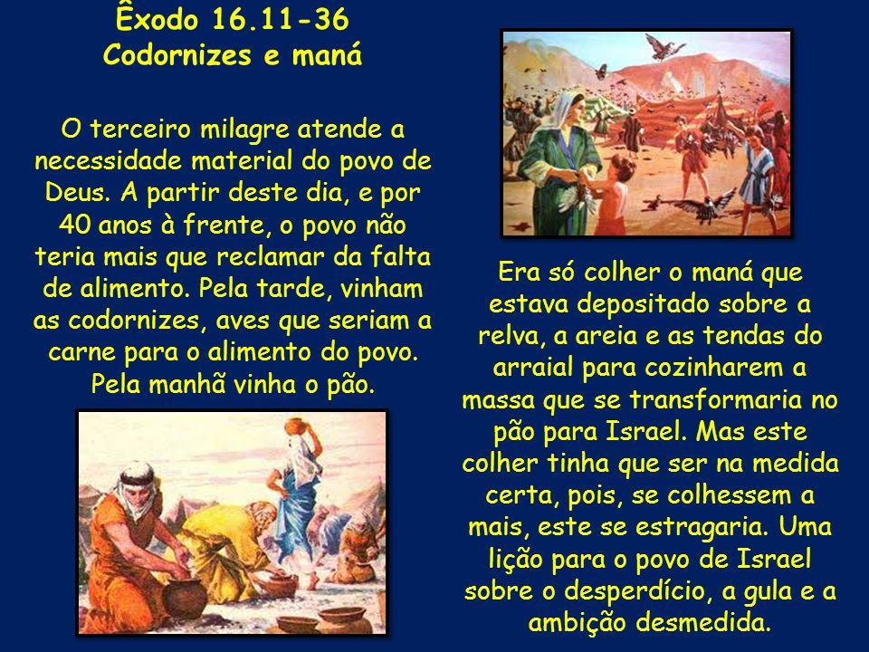 Êxodo 16.11-36 Codornizes e maná