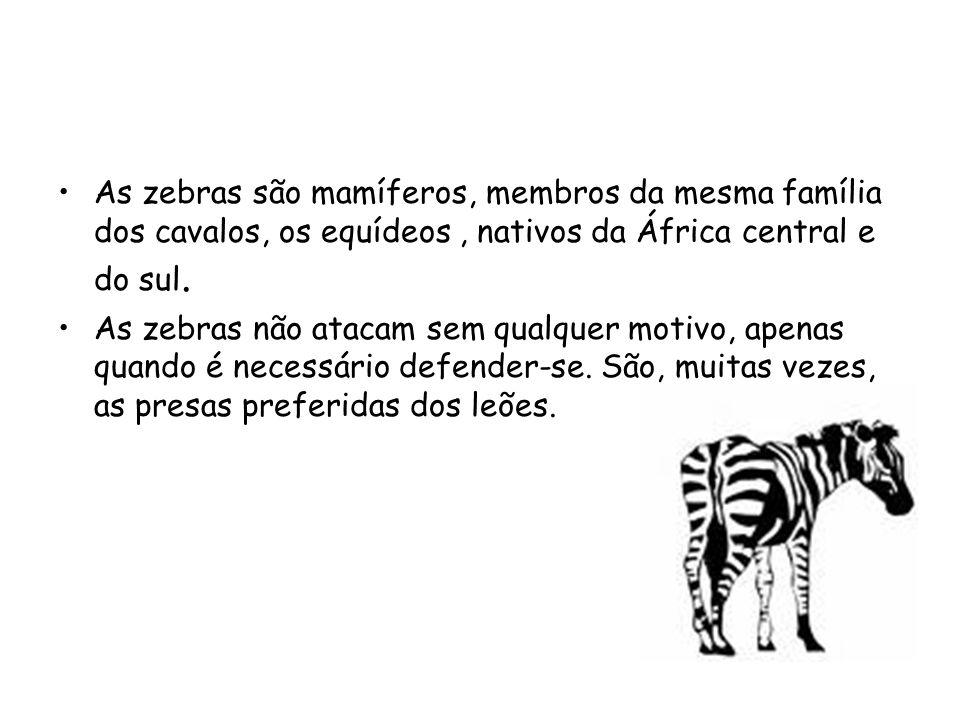 As zebras são mamíferos, membros da mesma família dos cavalos, os equídeos , nativos da África central e do sul.