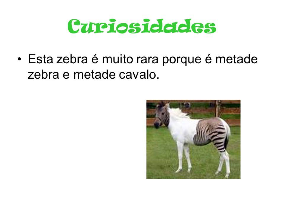 Curiosidades Esta zebra é muito rara porque é metade zebra e metade cavalo.