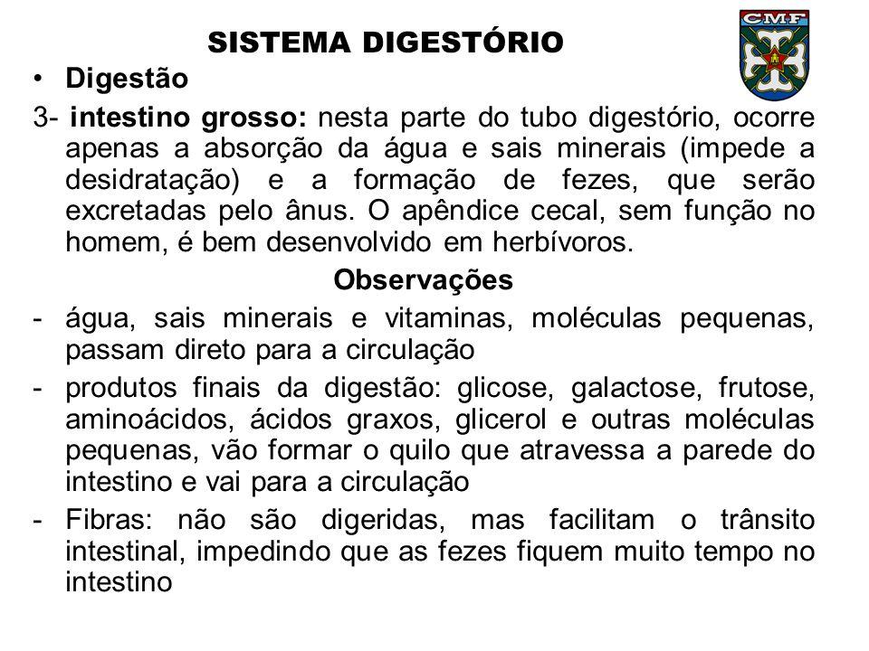 SISTEMA DIGESTÓRIO Digestão.