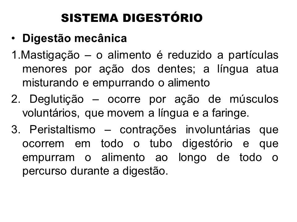 SISTEMA DIGESTÓRIO Digestão mecânica.