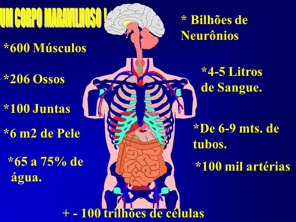 * Bilhões de Neurônios *600 Músculos *4-5 Litros *206 Ossos de Sangue.