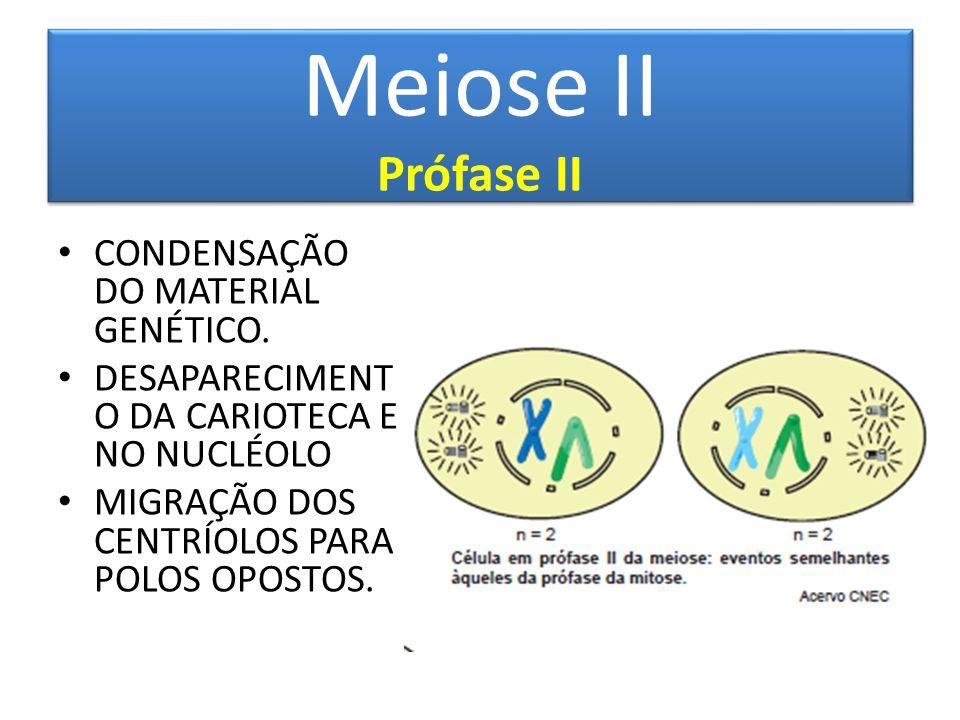 Meiose II Prófase II CONDENSAÇÃO DO MATERIAL GENÉTICO.