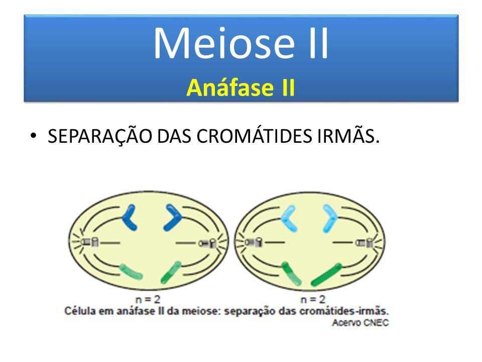 Meiose II Anáfase II SEPARAÇÃO DAS CROMÁTIDES IRMÃS.