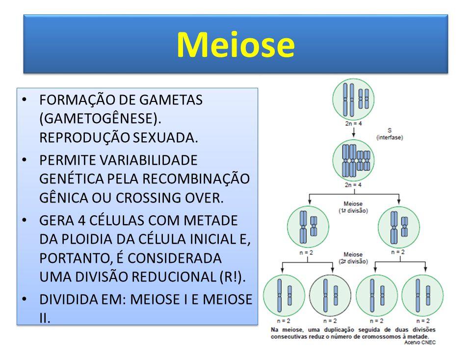 Meiose FORMAÇÃO DE GAMETAS (GAMETOGÊNESE). REPRODUÇÃO SEXUADA.