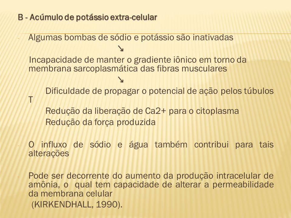 Algumas bombas de sódio e potássio são inativadas ↘