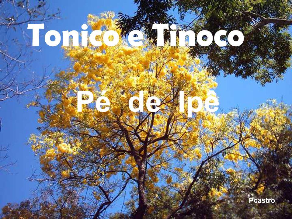 Tonico e Tinoco Pé de Ipê Pcastro