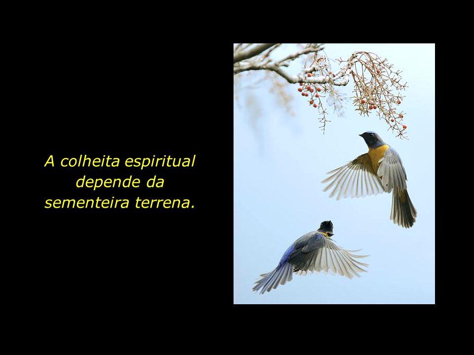 A colheita espiritual depende da sementeira terrena.