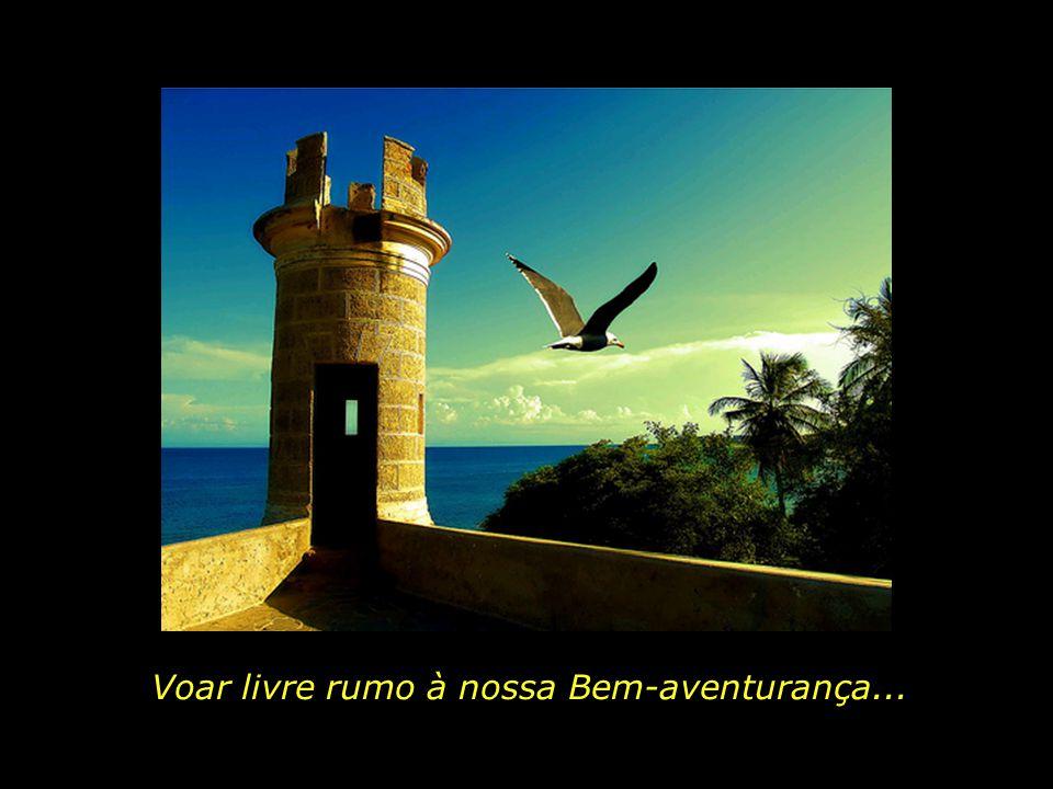 Voar livre rumo à nossa Bem-aventurança...