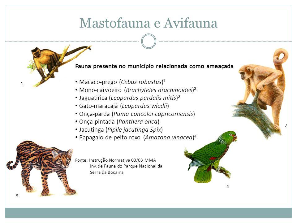 Mastofauna e Avifauna 1. Fauna presente no município relacionada como ameaçada. Macaco-prego (Cebus robustus)¹.