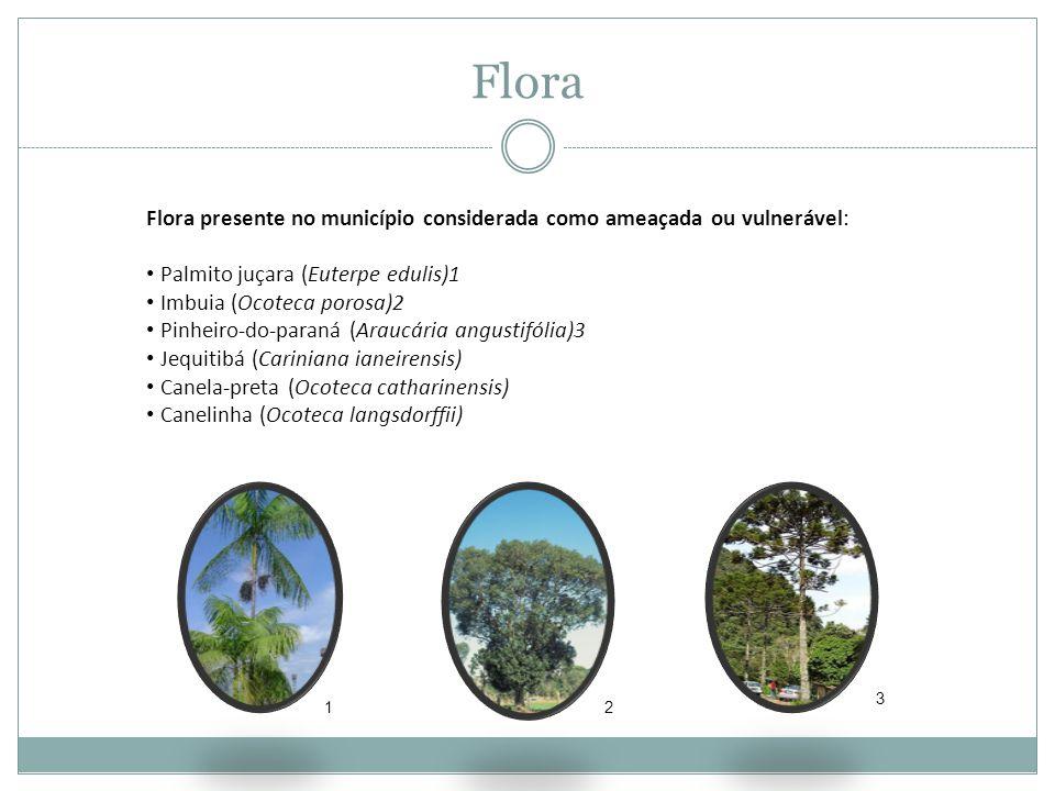Flora Flora presente no município considerada como ameaçada ou vulnerável: Palmito juçara (Euterpe edulis)1.