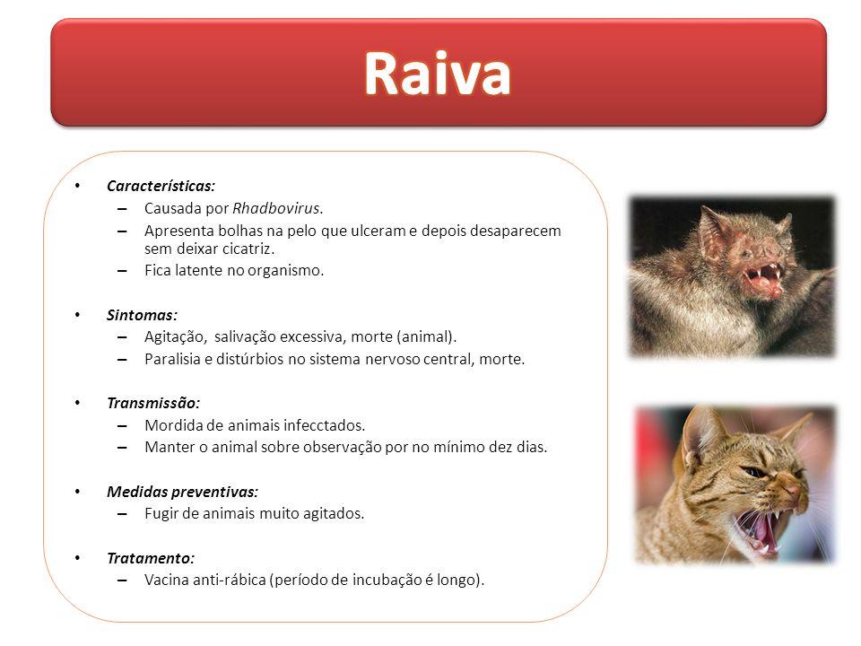 Raiva Características: Causada por Rhadbovirus.