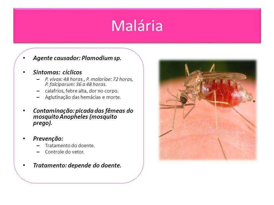 Malária Agente causador: Plamodium sp. Sintomas: cíclicos