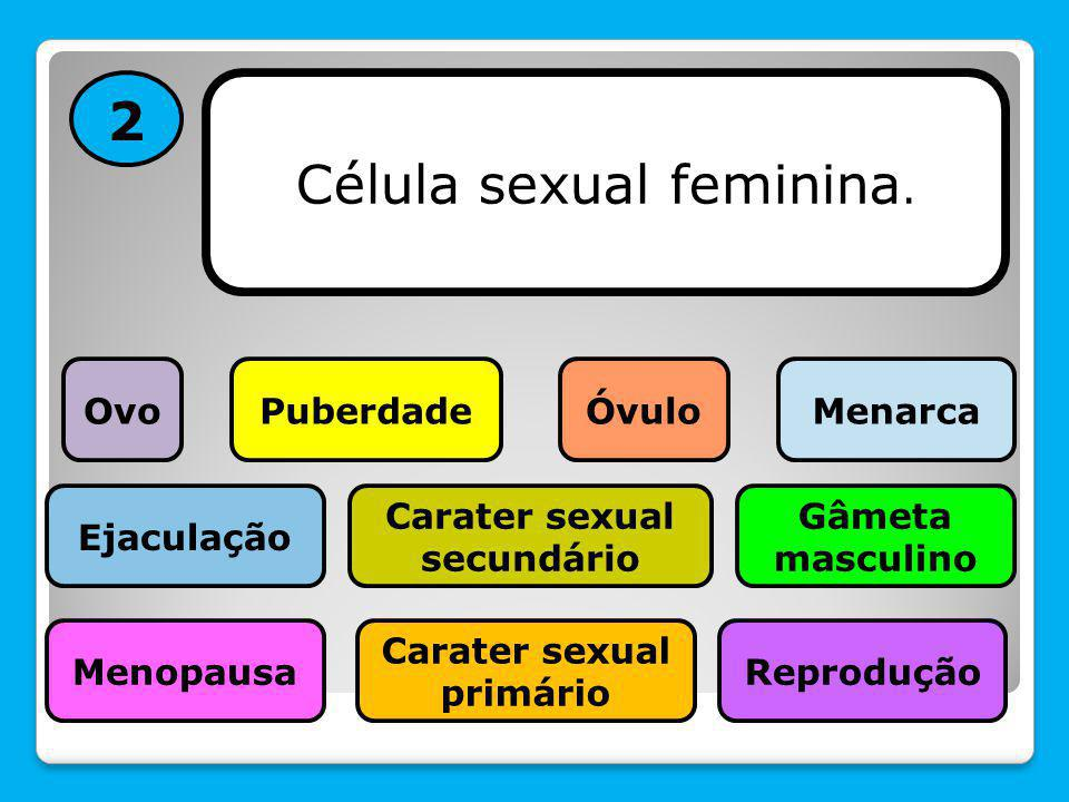 Carater sexual secundário Carater sexual primário