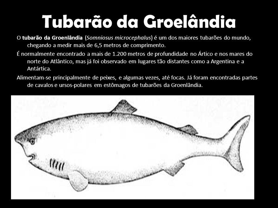 Tubarão da Groelândia