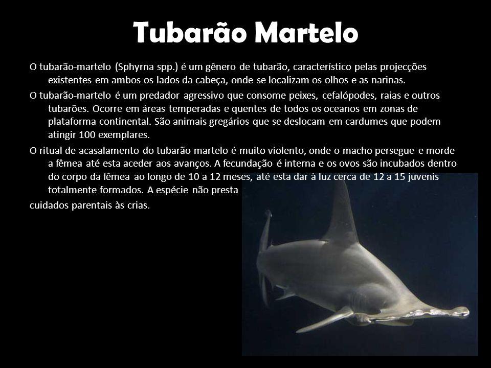 Tubarão Martelo